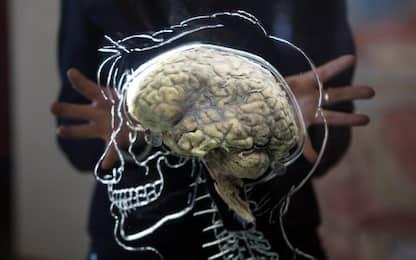 Riprodotto il primo mini cervello umano completo