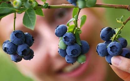 I polifenoli contenuti nei mirtilli possono proteggere dalle carie