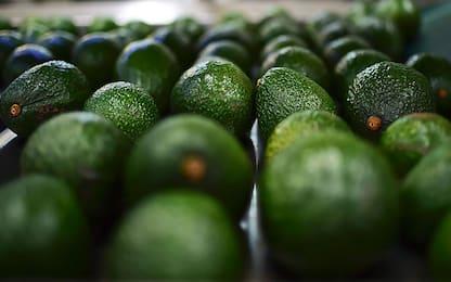 Un avocado al giorno ridurrebbe il colesterolo cattivo nel sangue