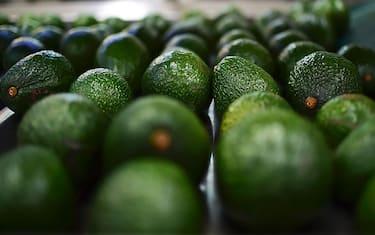 GettyImages-Avocado