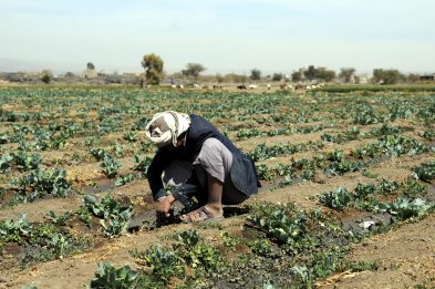 Il 16 ottobre è la Giornata mondiale dell'Alimentazione. GRAFICI