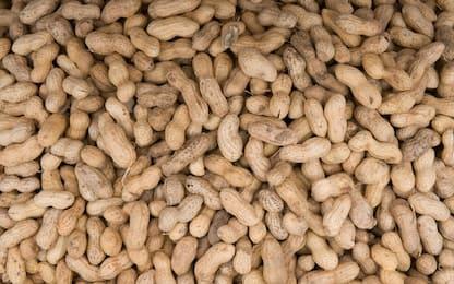 Realizzata la mappa del Dna delle arachidi: ecco la storia
