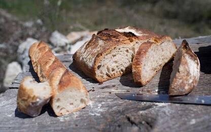 Dieta 'low-carb'? La scienza sottolinea l'importanza dei carboidrati