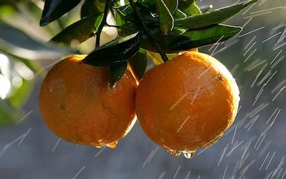 Spremuta d'arancia: calorie, benefici e valori nutrizionali