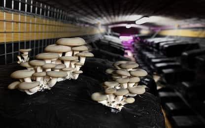 La Nasa pensa a case fatte di funghi per la Luna e Marte