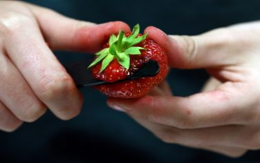 fragola_getty_images