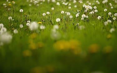 primavera_getty_images