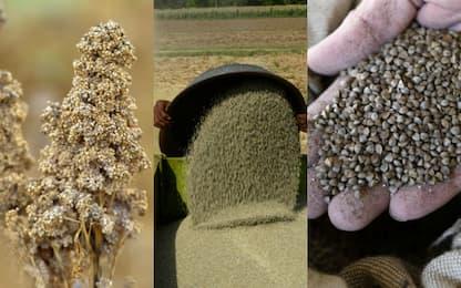 Quinoa, miglio, grano saraceno: i benefici dei falsi cereali