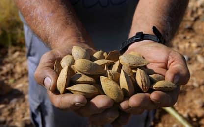 Ragusa, sequestrate 98 tonnellate di mandorle bio non tracciabili