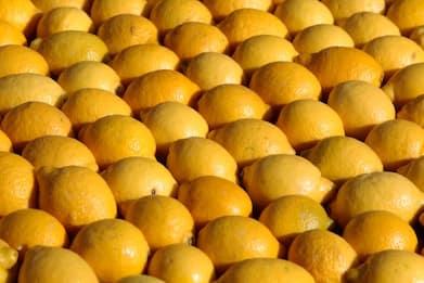 Torino, muffa su limoni e mandarini: sequestrati 250 chili