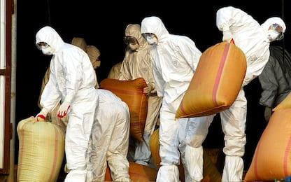 Influenza aviaria H5N8, individuato focolaio in allevamento romagnolo