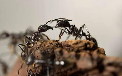 Formiche e robot a confronto negli scavi: vincono gli insetti