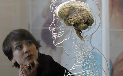 Il cervello delle donne è 3,8 anni più giovane di quello degli uomini