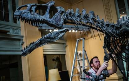 Scoperto in un dinosauro il tumore più antico del mondo