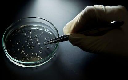 Virus 'killer'? Una molecola può renderli innocui
