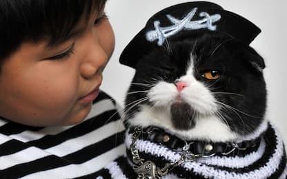 Uno studio inglese: cani e gatti i migliori amici dei bambini