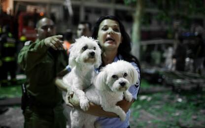 I cani potrebbero rispecchiare le ansie dei padroni