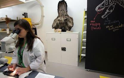 Scoperto in Canada il fossile più antico del mondo