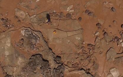 Australia, scoperta l'impronta di dinosauro più grande al mondo