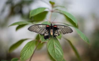 Quando sono nati gli insetti? Uno studio fa luce sulla loro datazione