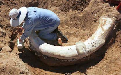 Canada, ritrovati resti mummificati di animali dell'era glaciale