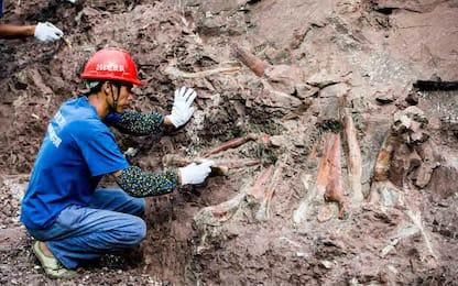 Cina, 5000 fossili di dinosauro