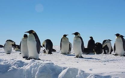 Antartide, scoperte undici colonie di pinguini dallo spazio