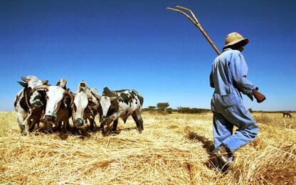 Tradizione agricola e genomica unite per ottenere il grano migliore