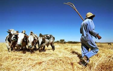 Getty_Images_Grano_Eritrea