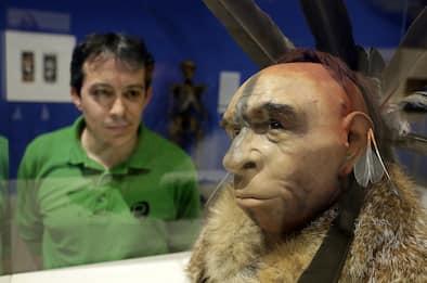 Neanderthal estinti per la sfortuna: non fu colpa dell'Homo Sapiens