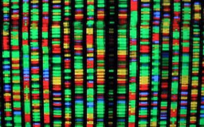 Individuata una proteina in grado di silenziare i geni nelle cellule