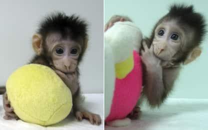 Cina, clonate 5 scimmie malate di insonnia