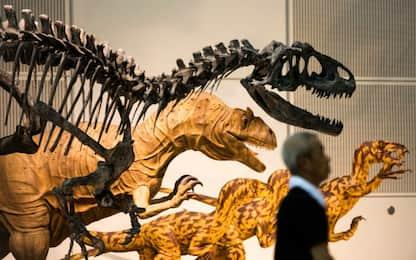 Dinosauri, nuove impronte: brontosauri camminavano su 2 zampe in acqua