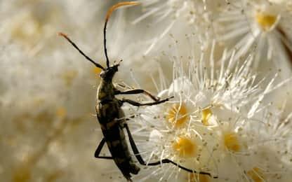 Negli insetti nascosto il segreto per conservare i cibi in modo bio