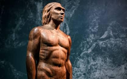 I nostri antenati avevano un cervello simile a quello delle scimmie