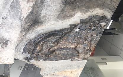 Bruno, il dinosauro più grande d'Italia si presenta al pubblico