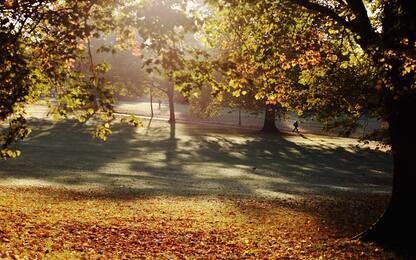 L'ingegneria genetica può impedire la riproduzione incontrollata degli alberi