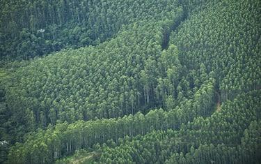GettyImages-alberi