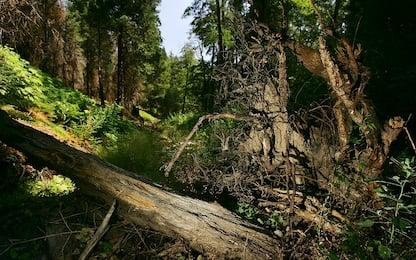 Le radici degli alberi si sono evolute attraverso i secoli