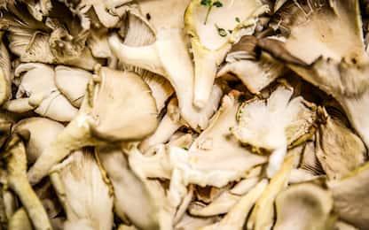Il declino del cervello si combatte mangiando i funghi