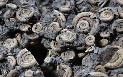 Esplosione Cambriana, un nuovo studio ha stabilito quando si verificò