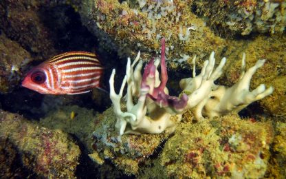 Le fibre microplastiche possono causare danni respiratori nei pesci
