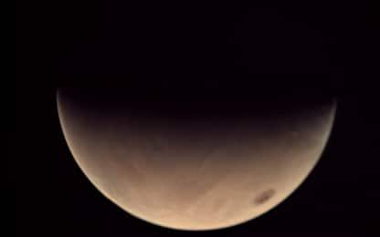 Un fungo cresciuto a Chernobyl potrebbe permettere la vita su Marte