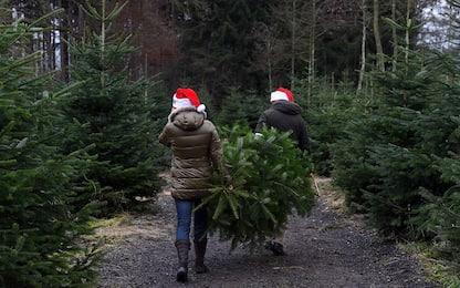 Napoli, tre ragazzi rubano un albero di Natale: denunciati