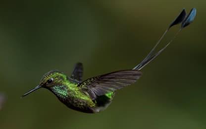Nebbiuno, caccia: uccellagione illegale, denunciato un uomo