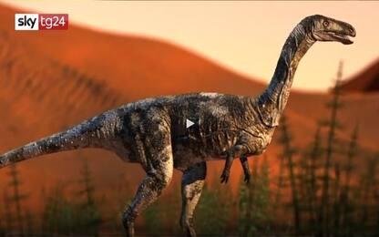 Brasile, scoperto parente del Velociraptor con caratteristiche uniche