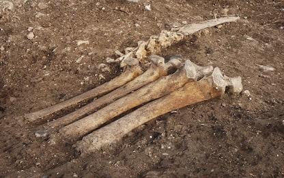 Gli uomini del Paleolitico sapevano conservare il cibo: ecco come