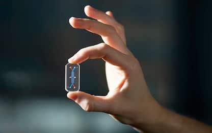 Ricreato in laboratorio il fegato su chip con cellule umane