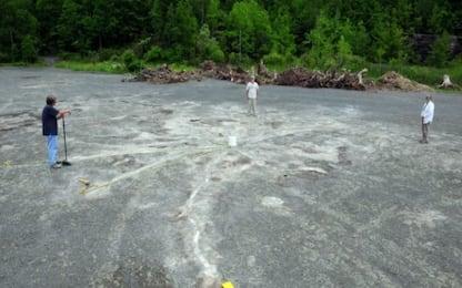 Ritrovati i resti della foresta più antica del mondo