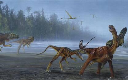 Scoperta nuova specie di dinosauro grazie a un cranio radioattivo